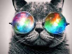 #trippy #cat