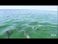 hung out with dozens of dolphins yesterday!