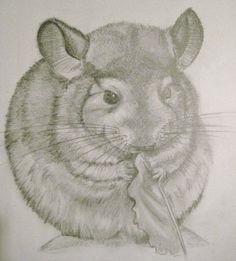 Beautiful sketch of Gus Gus the Chinchilla