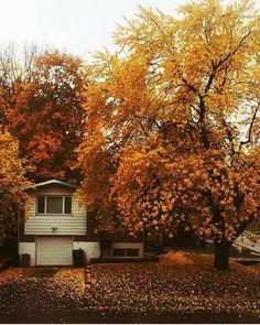 A home in Montreal over taken by fall foliage. 🍁 Picture by @airsociety_rick. #mtlblog #mtlblognews #montreal #montréal #mtl #quebec #québec #qc #canada #mtlmoments #downtownmontreal #oldmontreal #oldportmtl #fall #fall2016 #autumn #autumn2016 #vancouver #britishcolumbia #toronto #ottawa #ontario #calgary #edmonton #halifax #novascotia