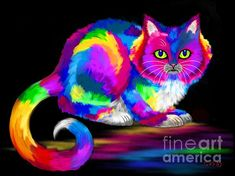 Another rainbow painted cat