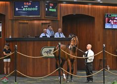 The Ocala Breeders' Sales Company's April Sale of 2-Year-Olds in Training continued its positive trends with a competitive session of bidding Wednesday. A colt by Medaglia d'Oro (hip 584) led proceedings on the auction's …