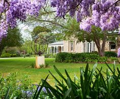 Pendulous clusters of wisteria frame this view of Evandale's front lawn, fringed by mass plantings of agapanthus. A Chinese elm planted by Jenni and Dick, right, provides generous shade. The metal sculpture is by local artist Trent Manning. Australian Garden, Australian Homes, Tropical House Plants, Kangaroo Paw, Hydrangea Garden, Types Of Succulents, Propagating Succulents, Low Maintenance Garden, Mediterranean Garden