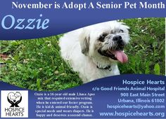 November is Adopt A Senior Pet Month! OZZIE is available for adoption from Hospice Hearts URBANA, IL. www.hospicehearts.org Ozzie is a 16-year old male Lhasa Apso mix that required extensive vetting when he entered our foster program. He is kid & animal friendly. Ozzie is special needs and wears diapers. He is happy and deserves a second chance. Hospice Hearts c/o Good Friends Animal Hospital 908 East Main Street Urbana, Illinois 61802 hospicehearts@yahoo.com PLEASE SHARE! THANK YOU!