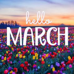 March is the gentle rays of the morning sun, flowers blooming, spring showers, fresh vegetables in your garden, birds chirping. Seasons Months, Days And Months, Months In A Year, 12 Months, Hello March Images, Hello March Quotes, January Images, New Month Wishes, February Month
