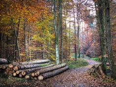 In the autumn Forest by Habub3, via Flickr