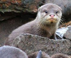 I otter hug you.