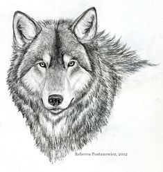 Easy Pencil Sketches of Animals | Wolf Pencil Drawing by psychedeliczen on deviantART