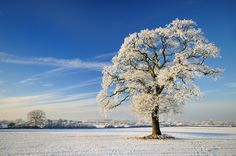winter ice + bluest skies