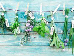 Quoi de plus pratique pour sublimer vos plats que d'avoir à portée de main des herbes fraîches au quotidien ? Basilic, thym, persil, estragon… Nos conseils pour bien choisir les plantes aromatiques qui conviennent à votre balcon.