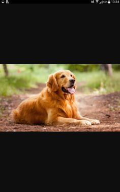 A everybody likes beautiful dog breeds - this is just another proof of imagination and mastery of nature, which is creating so much surprise. Dog Breeds List, Best Dog Breeds, Best Dogs, Most Beautiful Dog Breeds, Beautiful Dogs, Top New Movies, A Dogs Purpose Movie, Most Cutest Dog, Cider House Rules