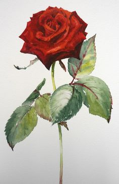 ~Learn how to paint this stunning red rose in watercolour with Sian Dudley now at ArtTutor.com~