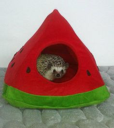 African hedgehog, guinea pig bed, house 25* 25cm height: 25cm The lining is reversibile. Please feel free to contact me with any questions! Buyers are responsible for any customs and import taxes that may apply. Sellers arent responsible for delays due to customs.