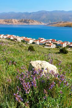 Pag, where the lambs feed on Rosemary growing on the hillsides Beautiful Places To Visit, Cool Places To Visit, Places To Travel, Places To Go, Visit Croatia, Croatia Travel, Montenegro, Dalmatia Croatia, Famous Places