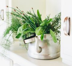 How These 5 Easy-To-Grow Plants Can Ease Brain Fog http://www.mindbodygreen.com/0-24744/how-these-5-easy-to-grow-plants-can-ease-brain-fog.html
