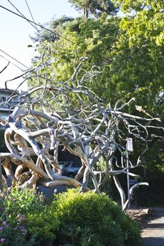 Drift Wood Scuplture #travel #travelphotography #travelinspiration #sanfrancisco #wanderlust #YLP100BestOf