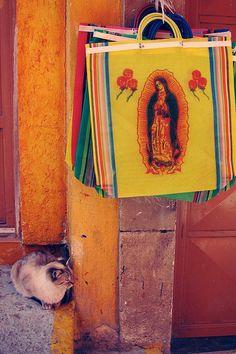 que excelente foto... hoy dia de guadalupe. Ace Camp - Geninne D. Zlatkis - Queretaro, Mexico by ritchieacecamps, via Flickr