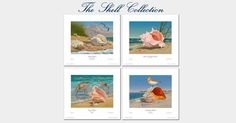 """Come to Atlantic Beach, North Carolina and see me at the Coral Bay Club's """"Ballroom Boutique"""" on Wednesday, June 24th, 2015!  I'll be discussing and signing my new prints """"The Shell Collection"""". Also on display will be a rare """"Cape Lookout Morning"""" which just came back to the studio. The """"Ballroom Boutique"""" is open to the public from 10:00AM to 4:00PM. Bring a friend for a day of shopping at the Coral Bay Club at 1901 West Fort Macon Road, Atlantic Beach, NC 28512-5341. Hope to see you…"""