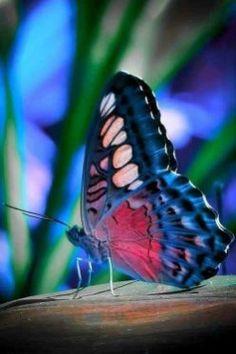 Butterflies And Moths 13
