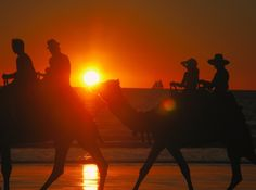 Camel riders at the sunset in Cable Beach