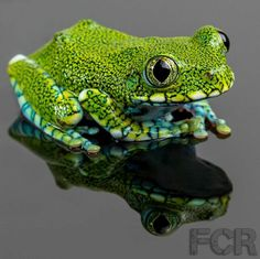 ENDANGERED: The peacock tree frog (Leptopelis vermiculatus) is found in forest areas in Tanzania.