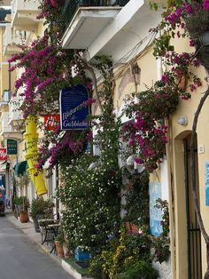 Bougainvillea on the streets of Monterosso, Cinque Terre, Italy (by StephenHinde).
