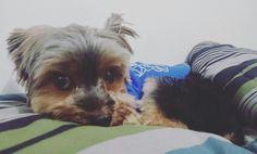 Ele é o mais lindo dentre todos os cachorrinhos #rick com sono ^^