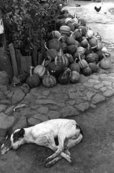 Ferdinando Scianna: Mexico, 1988
