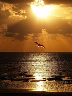 Hematite seas, golden sands, yellow diamond skies, blinding lights arise and then as moments of time pass, the spirited bird in flight becomes the only evident form of life, the center of focus... suddenly, you become one with the feathered friend and take a voyage of confidence.