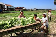 Vegetable farming is hard work but you wouldn't sense that from the joy seen on the faces of these hardworking children. Cambodia.