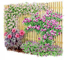 Composition habillant une clôture  - un jardin qui vous ressemble