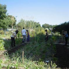 Agenda ecológica: Cursos gratuitos de huerto ecológico