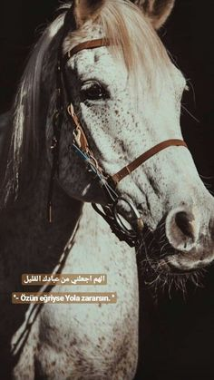 Thing 1, Allah Islam, Arabic Quotes, Book Quotes, Cool Words, Letters, Horses, Feelings, Animals