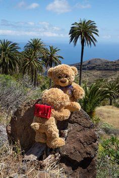 Teddy Bear Pictures, Bear Pics, Danbo, Bear Party, Cute Teddy Bears, Bear Wallpaper, Cute Stickers, Binky, Bird Cage