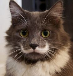 Fancy Cats With Mustaches Mustache Cat Cat And Animal - 10 famous cats internet