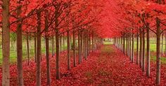 Take a stroll beneath these 9 natural tree tunnels | MNN - Mother Nature Network
