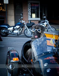 "Bertha ""Biker"" Dog in her sidecar with Doggles! Ready to ride!"