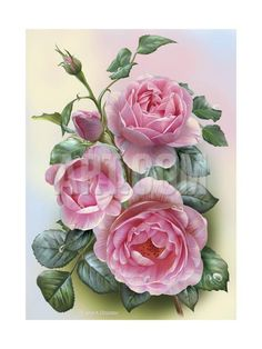 This counted cross stitch pattern of Pretty Pink Roses was created from the beautiful artwork of Olga and Alexey Drozdov. Vintage Diy, Vintage Flowers, Image Jesus, Cross Stitch Rose, Rose Art, Arte Floral, Beautiful Roses, Beautiful Artwork, Botanical Prints