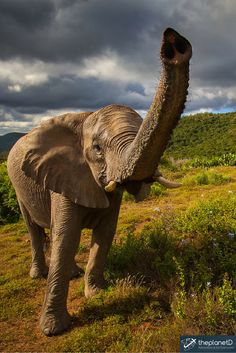 Up close and personal with an elephant in the reserve in South Africa   The Planet D: Adventure Travel Blog >> http://theplanetd.com/28-reasons-south-africa-bucket-list/