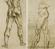 Da Vinci Anatomical Drawings