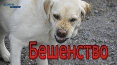 БЕШЕНСТВО / RABIES