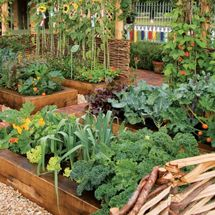 Intensive Gardening: Grow More Food in Less Space (With the Least Work!)