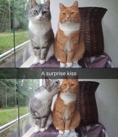 Cute animal memes, pictures of cute animals, cute funny animals, cute bab. Cute Animal Memes, Cute Animal Pictures, Cute Funny Animals, Cute Baby Animals, Animal Pics, Humorous Animals, Animal Humor, Baby Owls, Funny Pictures