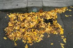 fall leaves on drain. Photo copyright Miles Hochstein