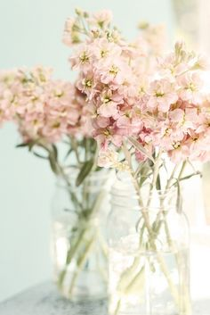 Blush pink flowers s