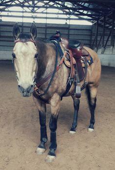 Horse Barns, Horse Stalls, Horse Tack, Barrel Racing Horses, Barrel Horse, Cute Horses, Pretty Horses, Horse Photos, Horse Pictures