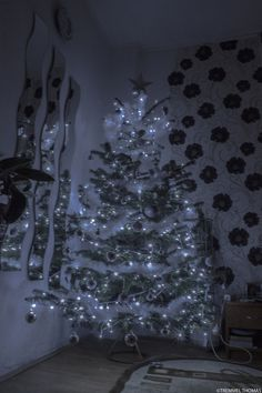 Christmas tree by tremmel thomas on