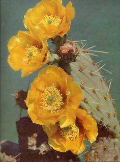 :: Desert Bloom ::