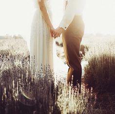 Golden twilght, lavender field