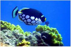 Photo Album by Michael L Shutters Fish Ocean, Shutters, Peeps, Album, Animals, Beauty, Beautiful, Blinds, Shades